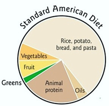 Standard American Diet from The First Green Smoothie by Victoria Boutenko